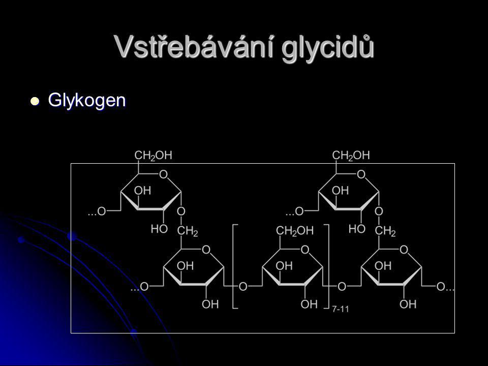 Vstřebávání glycidů Glykogen