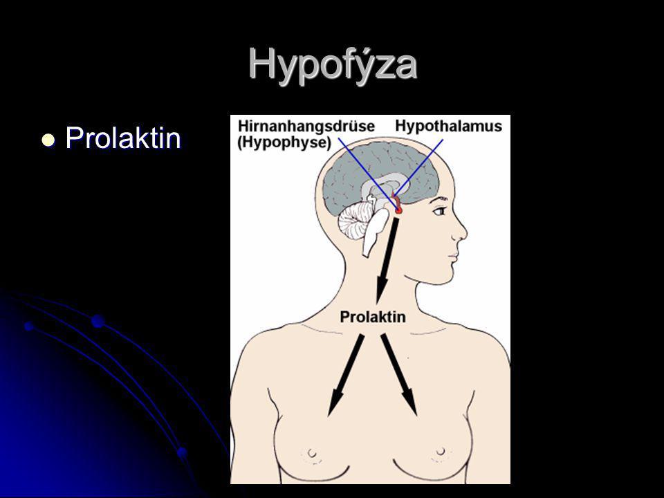 Hypofýza Prolaktin