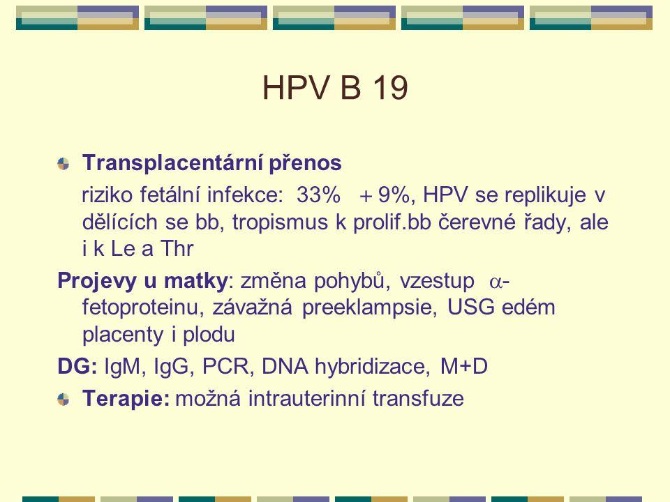 HPV B 19 Transplacentární přenos