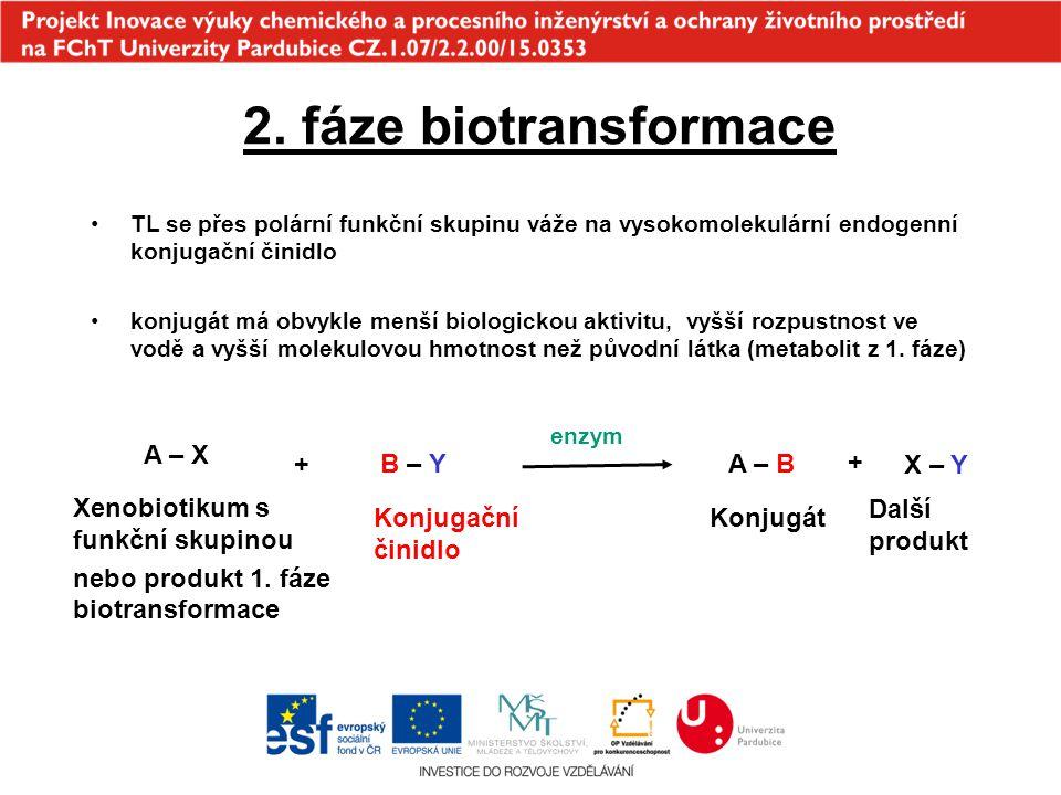 2. fáze biotransformace A – X + B – Y A – B + X – Y
