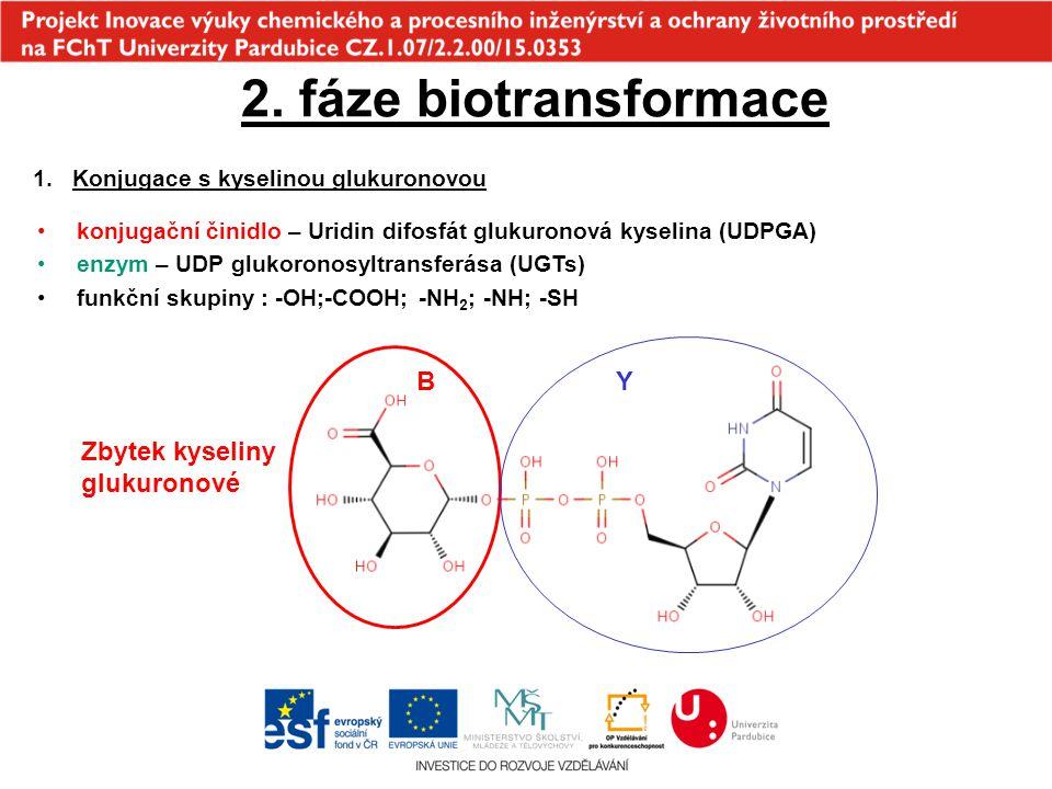 2. fáze biotransformace B Y Zbytek kyseliny glukuronové