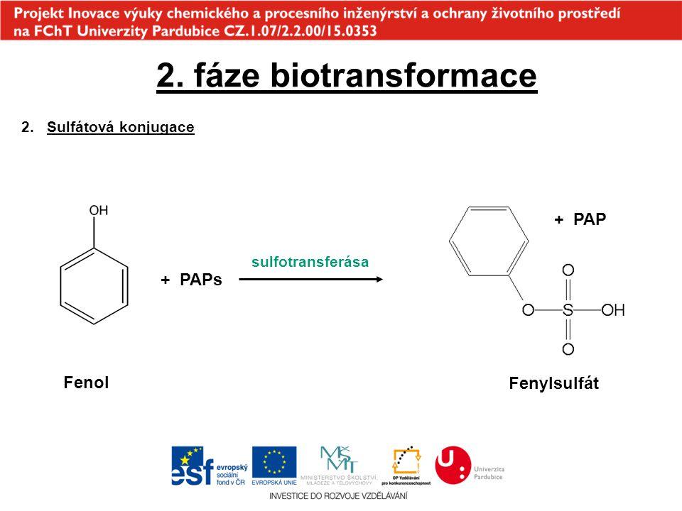 2. fáze biotransformace + PAP + PAPs Fenol Fenylsulfát