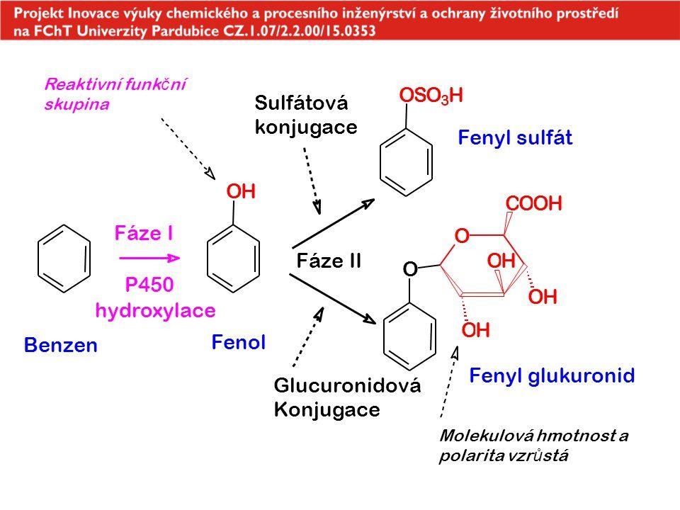 O S O H Sulfátová konjugace Fenyl sulfát O H C O O H Fáze I O Fáze II
