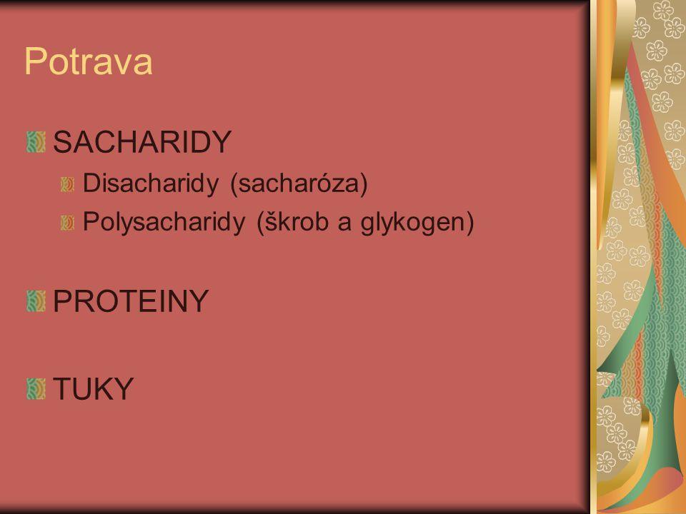 Potrava SACHARIDY PROTEINY TUKY Disacharidy (sacharóza)