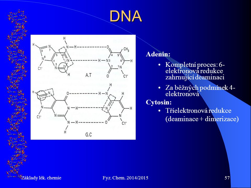 DNA Adenin: Kompletní proces: 6-elektronová redukce zahrnující deaminaci. Za běžných podmínek 4-elektronová.