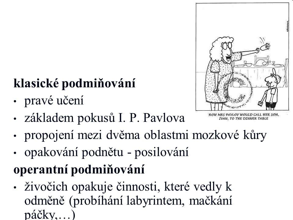 klasické podmiňování pravé učení. základem pokusů I. P. Pavlova. propojení mezi dvěma oblastmi mozkové kůry.