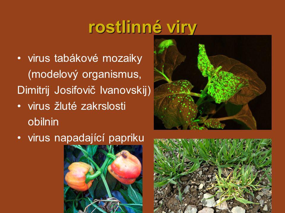 rostlinné viry virus tabákové mozaiky (modelový organismus,