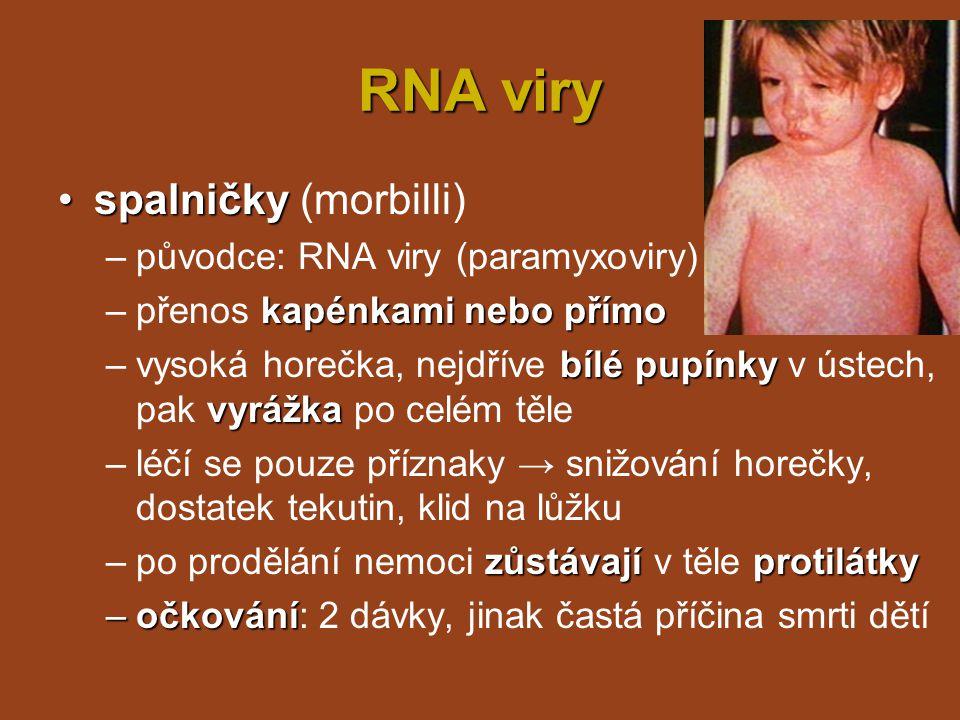 RNA viry spalničky (morbilli) původce: RNA viry (paramyxoviry)