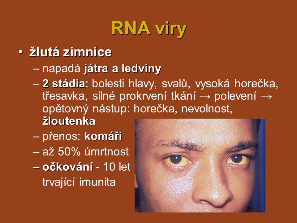 RNA viry žlutá zimnice napadá játra a ledviny