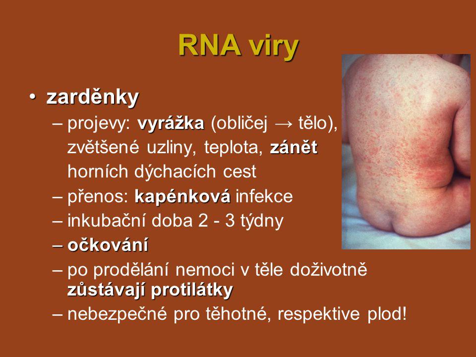 RNA viry zarděnky projevy: vyrážka (obličej → tělo),