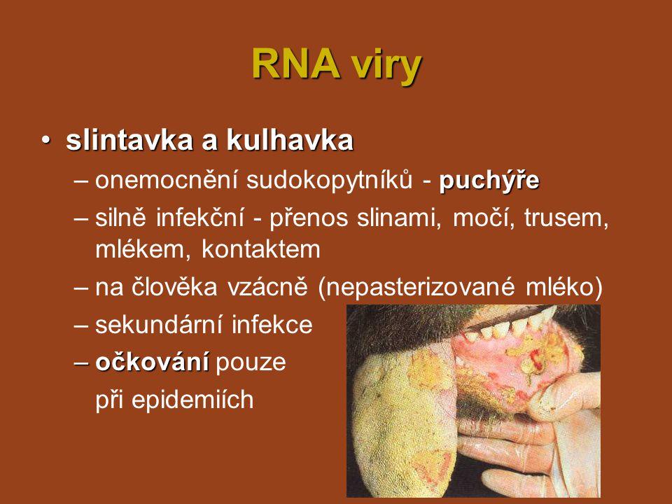 RNA viry slintavka a kulhavka onemocnění sudokopytníků - puchýře