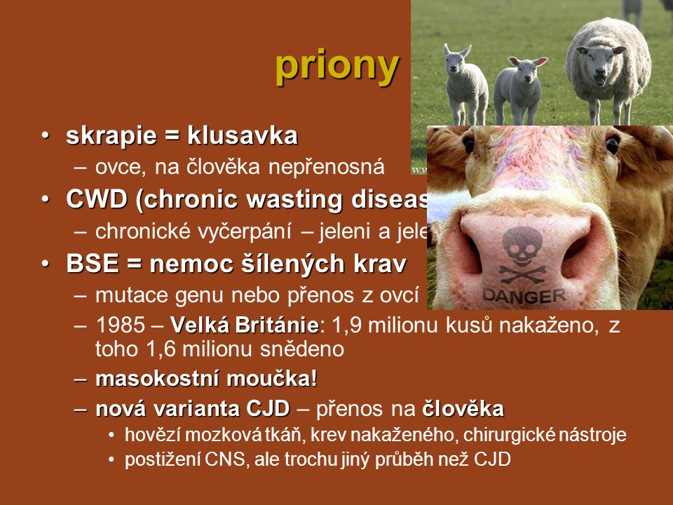 priony skrapie = klusavka CWD (chronic wasting disease)