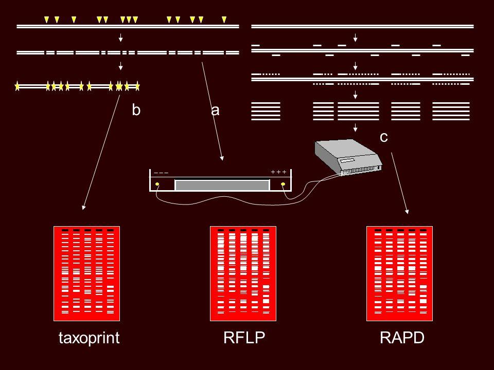 b a c _ _ _ + + + taxoprint RFLP RAPD