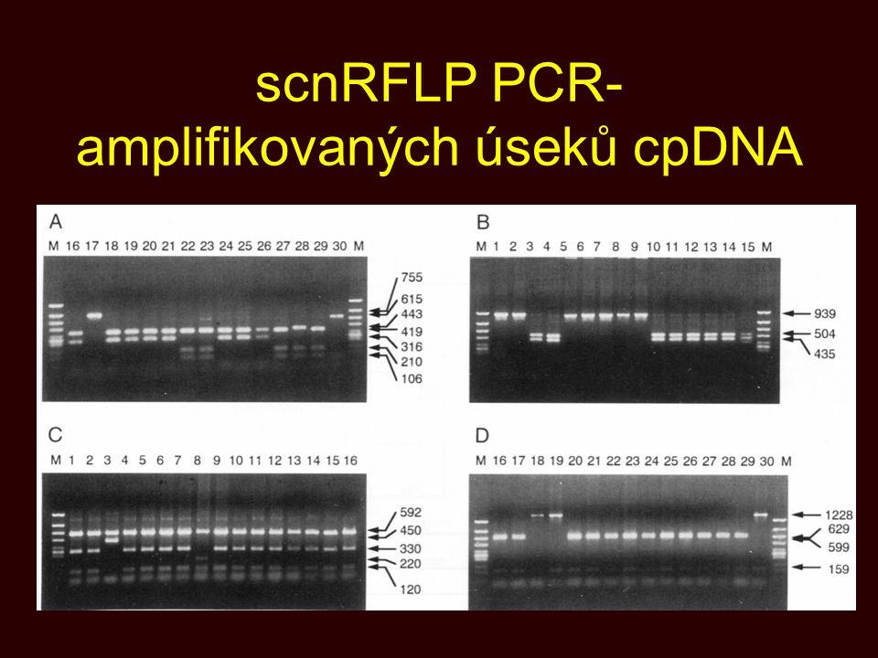 scnRFLP PCR-amplifikovaných úseků cpDNA