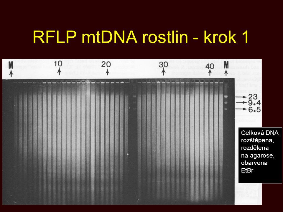 RFLP mtDNA rostlin - krok 1