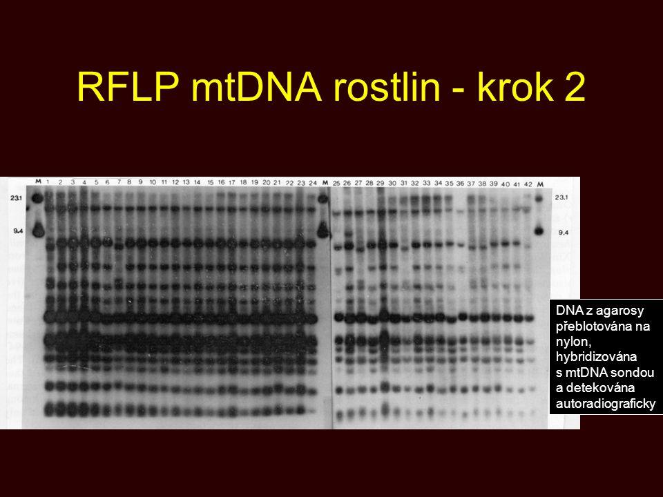 RFLP mtDNA rostlin - krok 2