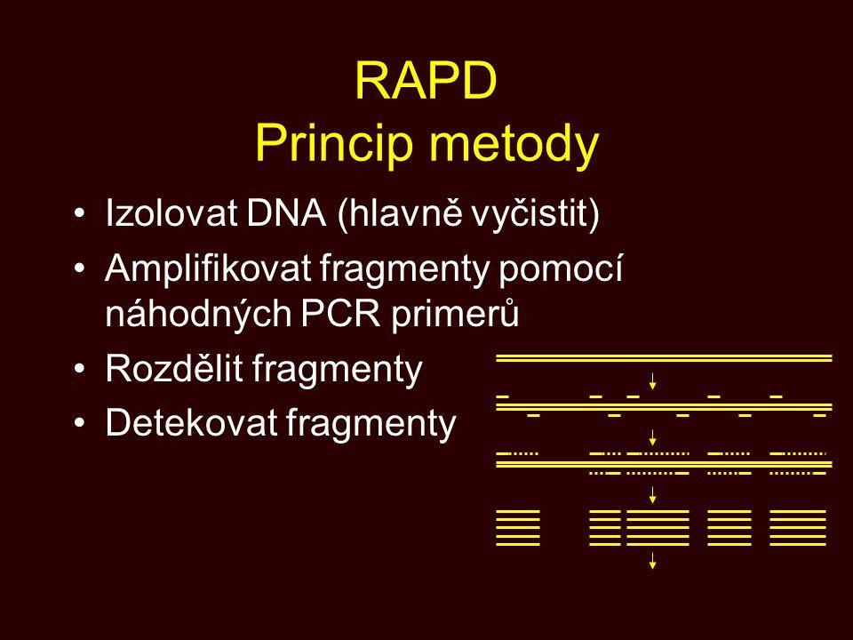 RAPD Princip metody Izolovat DNA (hlavně vyčistit)