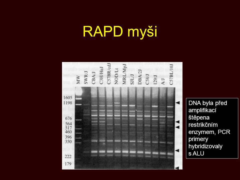 RAPD myši DNA byla před amplifikací štěpena restrikčním enzymem, PCR primery hybridizovaly s ALU.