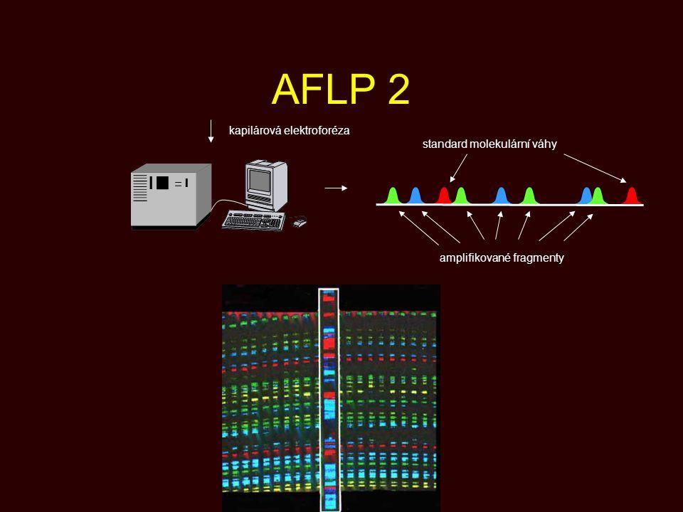 AFLP 2 kapilárová elektroforéza standard molekulární váhy