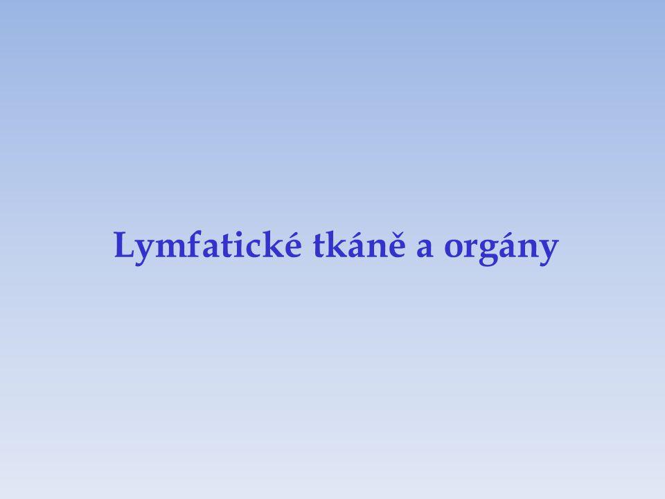 Lymfatické tkáně a orgány
