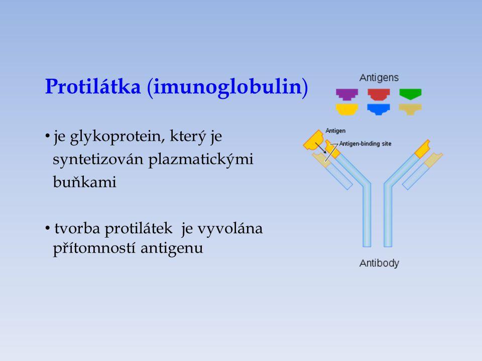 Protilátka (imunoglobulin)