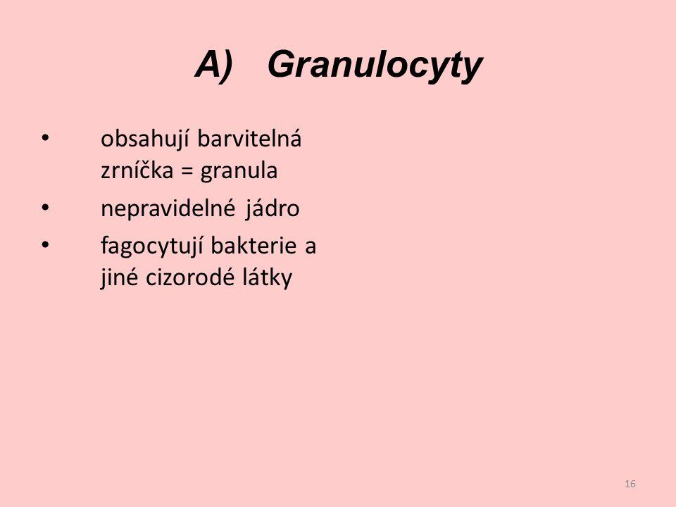 A) Granulocyty obsahují barvitelná zrníčka = granula
