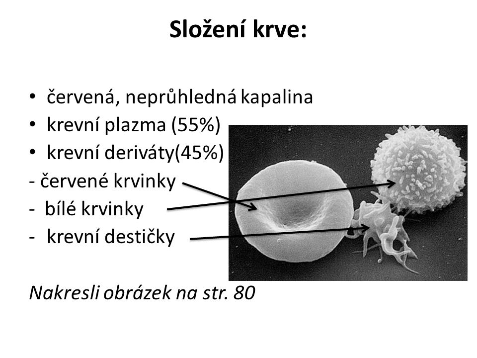 Složení krve: červená, neprůhledná kapalina krevní plazma (55%)