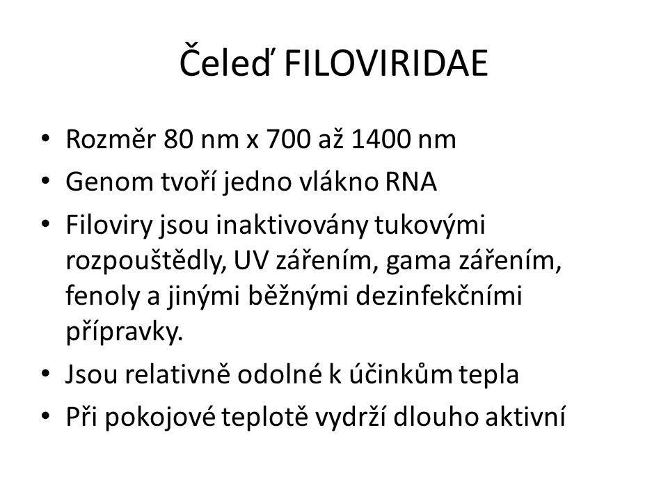 Čeleď FILOVIRIDAE Rozměr 80 nm x 700 až 1400 nm