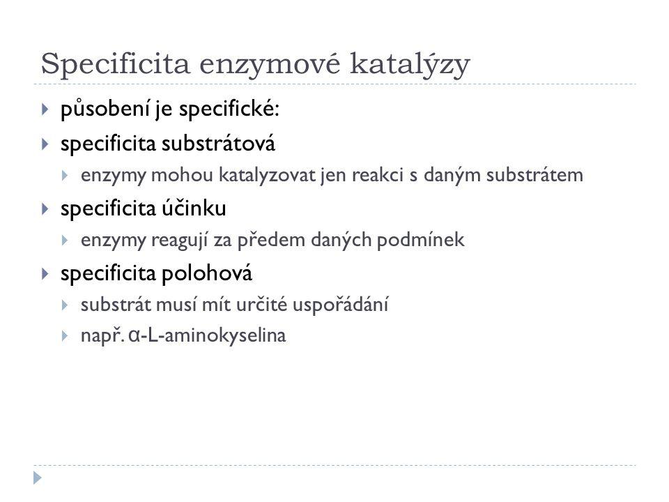 Specificita enzymové katalýzy
