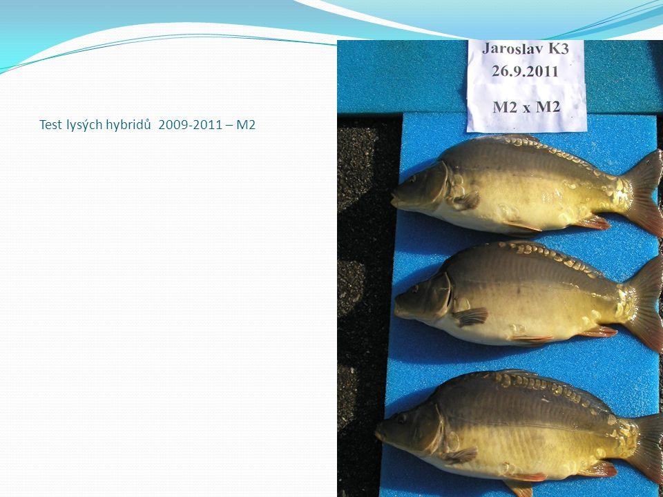 Test lysých hybridů 2009-2011 – M2