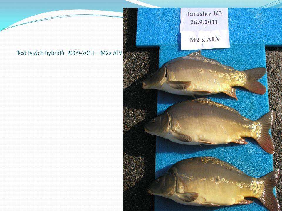 Test lysých hybridů 2009-2011 – M2x ALV