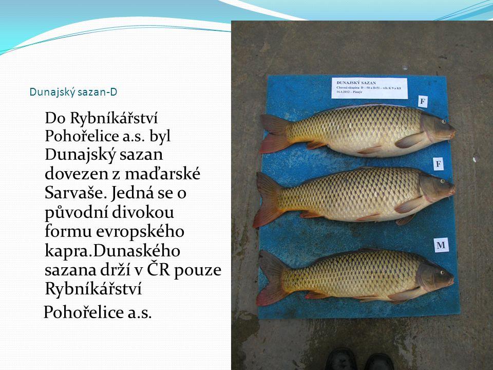 Dunajský sazan-D