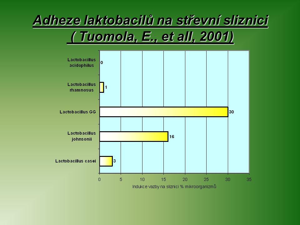 Adheze laktobacilů na střevní sliznici ( Tuomola, E., et all, 2001)