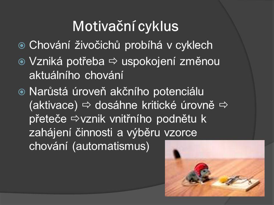 Motivační cyklus Chování živočichů probíhá v cyklech