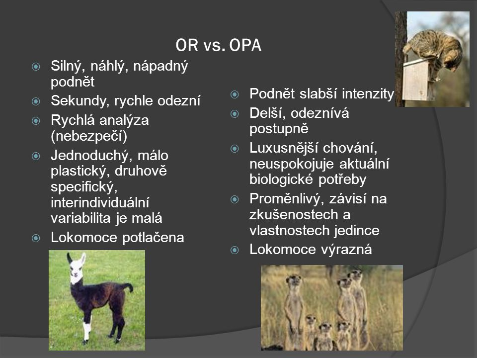 OR vs. OPA Silný, náhlý, nápadný podnět Sekundy, rychle odezní