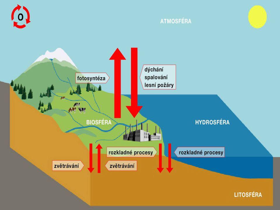 Koloběh kyslíku v přírodě patří k jednomu ze základních biogeochemických cyklů.