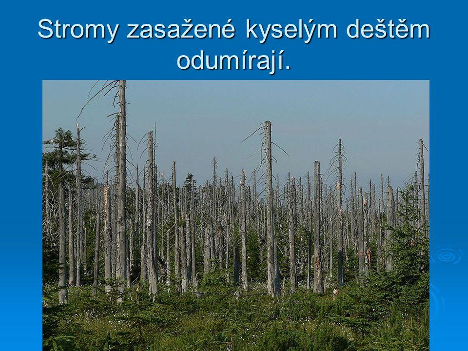 Stromy zasažené kyselým deštěm odumírají.