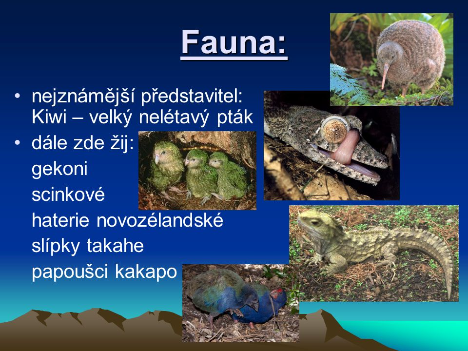 Fauna: nejznámější představitel: Kiwi – velký nelétavý pták