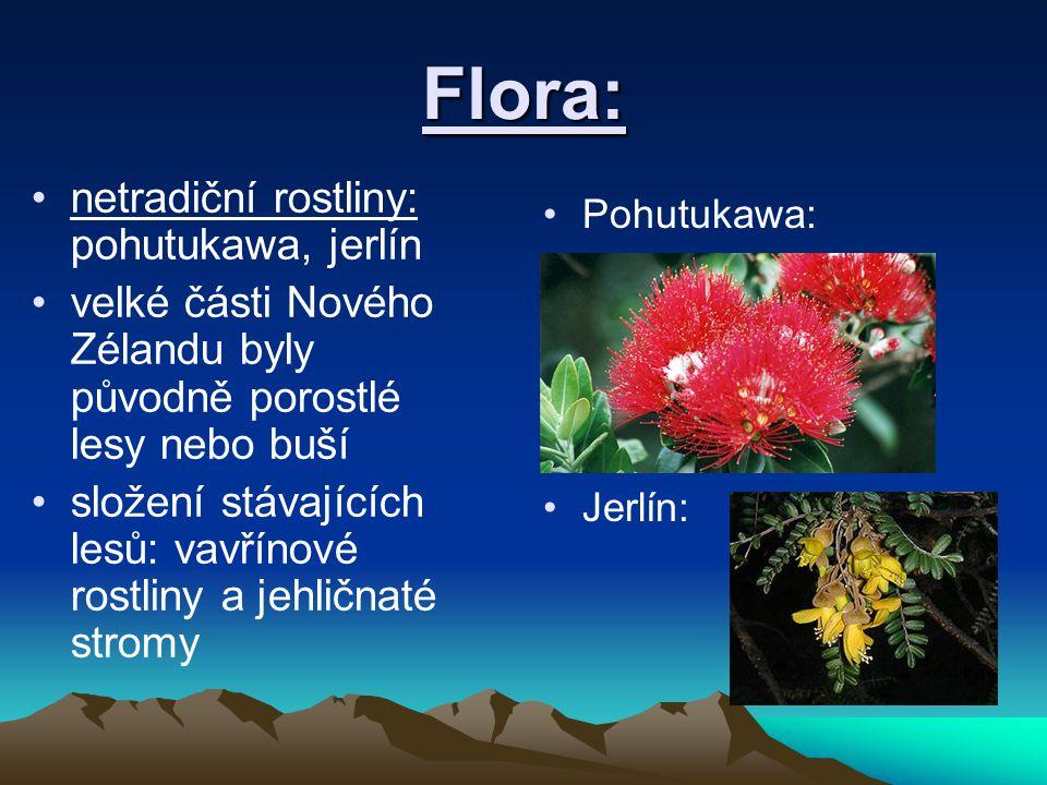 Flora: netradiční rostliny: pohutukawa, jerlín