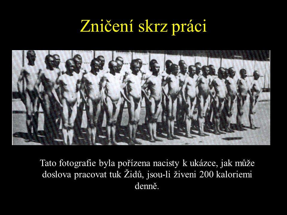 Zničení skrz práci Tato fotografie byla pořízena nacisty k ukázce, jak může doslova pracovat tuk Židů, jsou-li živeni 200 kaloriemi denně.
