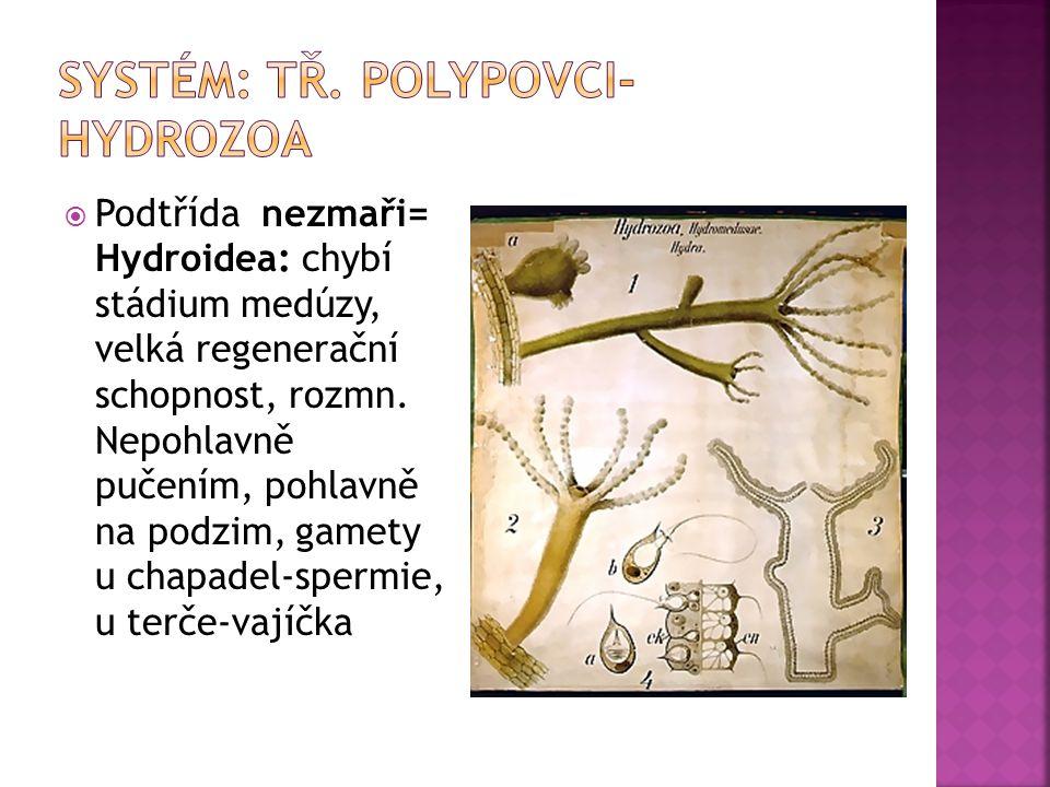 Systém: tř. polypovci-Hydrozoa