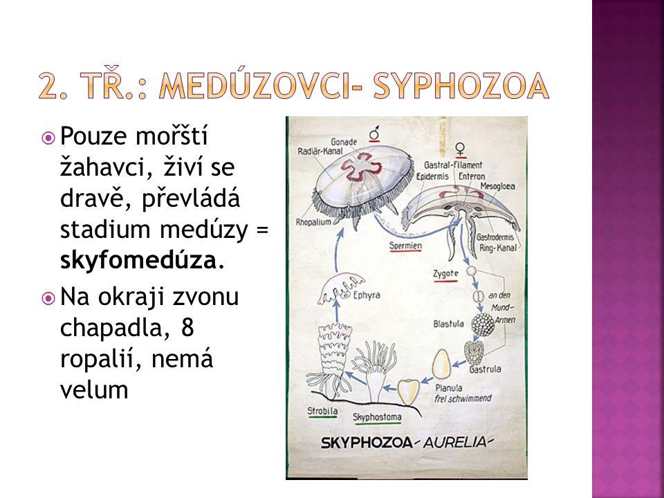 2. tř.: medúzovci- Syphozoa