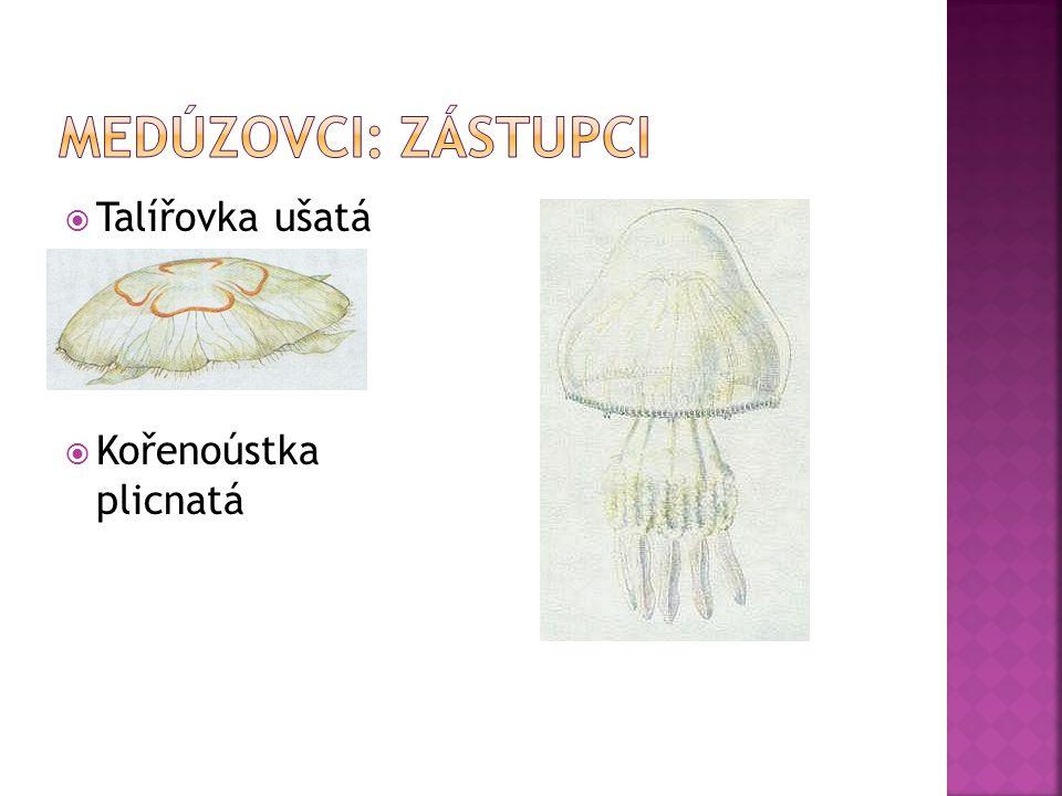 Medúzovci: zástupci Talířovka ušatá Kořenoústka plicnatá