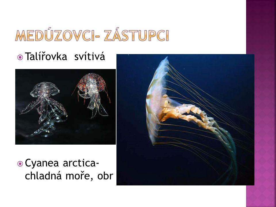 Medúzovci- zástupci Talířovka svítivá