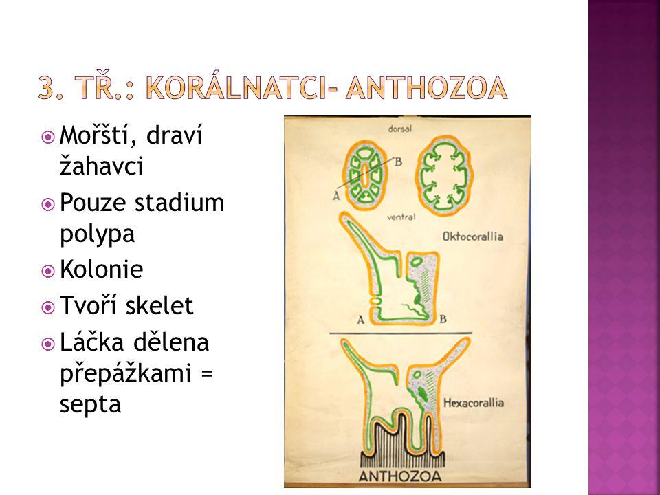 3. tř.: korálnatci- Anthozoa