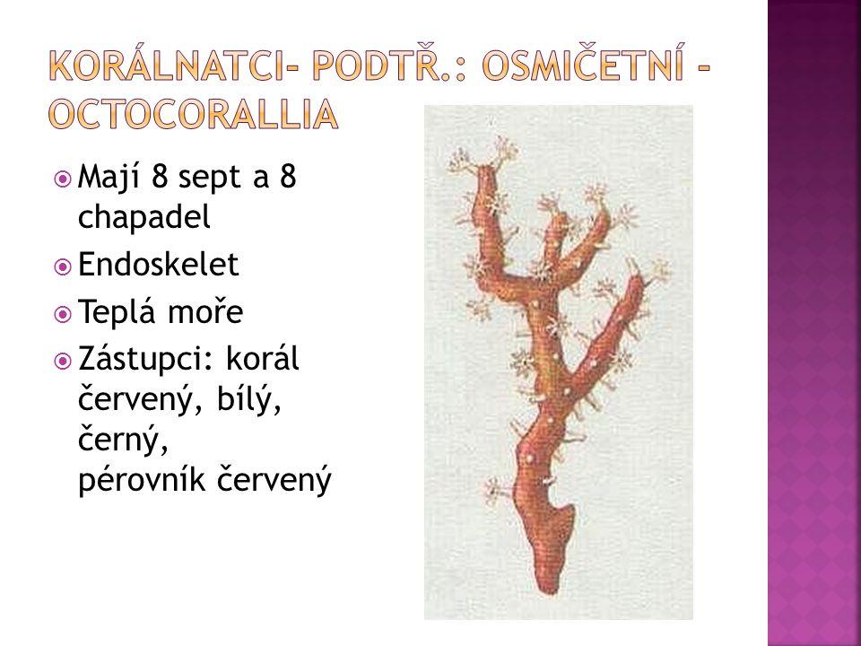 Korálnatci- podtř.: osmičetní - Octocorallia