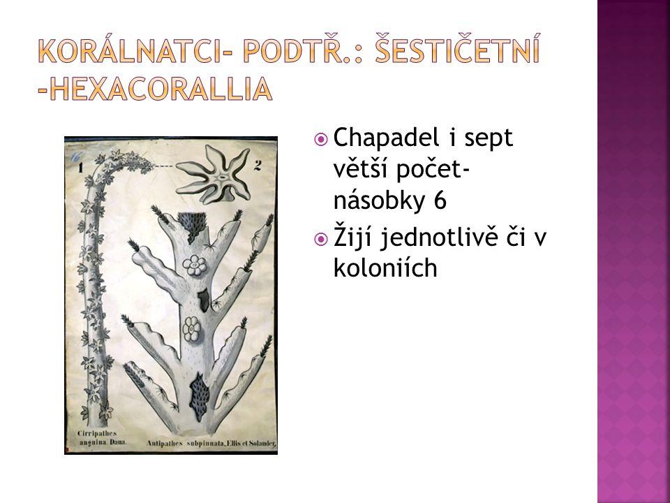 Korálnatci- podtř.: šestičetní -hexacorallia