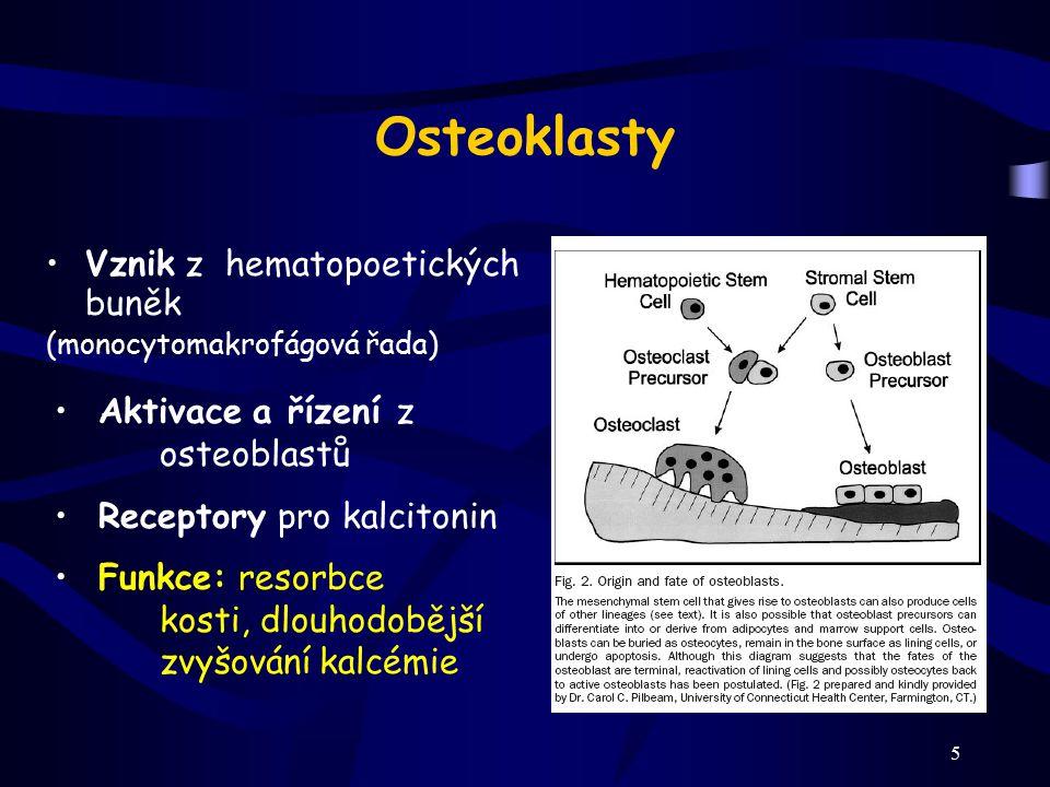 Osteoklasty Vznik z hematopoetických buněk