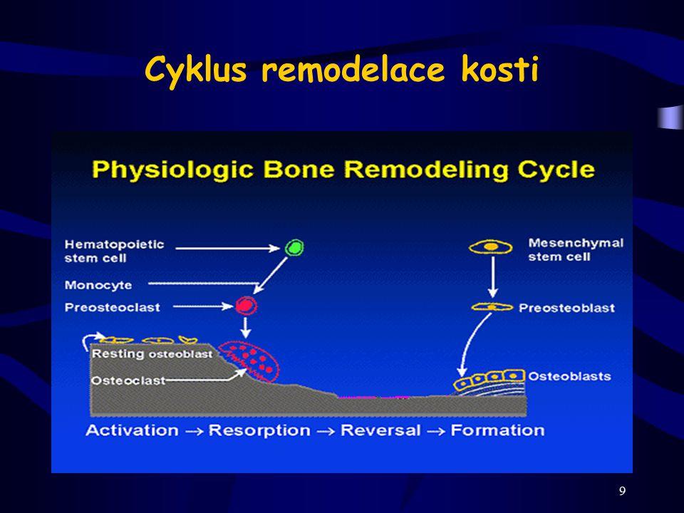 Cyklus remodelace kosti