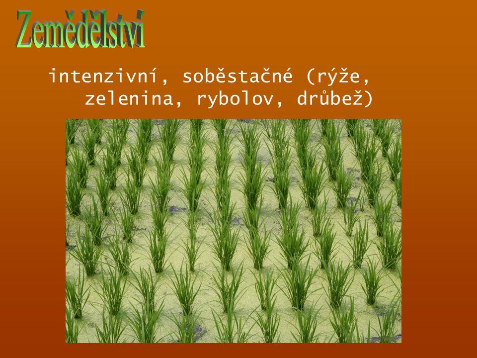 Zemědělství intenzivní, soběstačné (rýže, zelenina, rybolov, drůbež)
